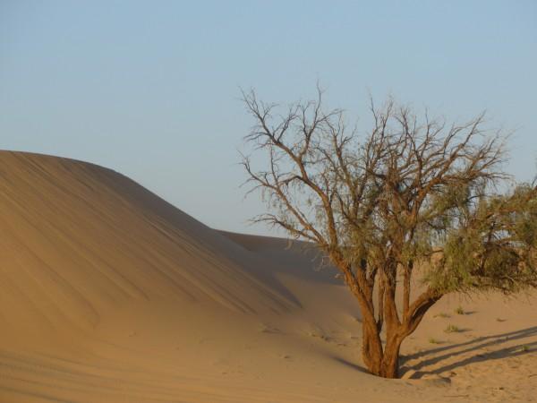 Desert scene near Al Ain, UAE
